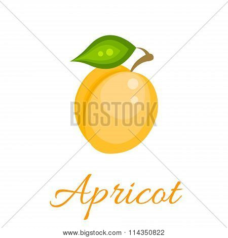 Orange apricot vector icon.