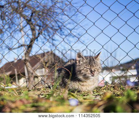 Small Cat Suffering