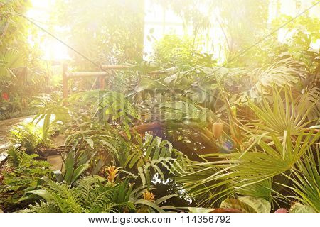 Plants in greenhouse at botanic garden