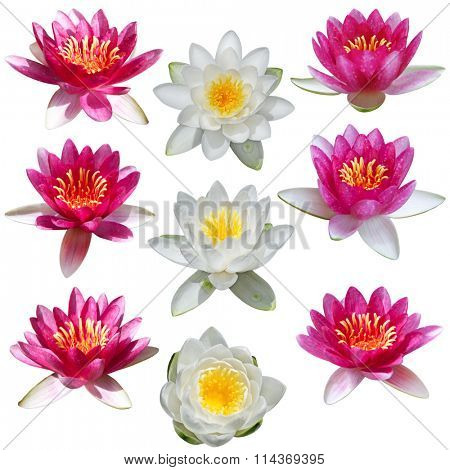 Lotus and water lily set isolated on white