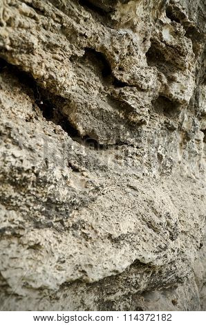 Limestone Sedimentary Rock Of Organic Origin