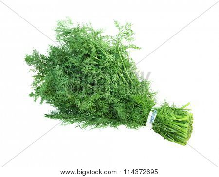 Bunch of fresh fennel leaves isolated on white background