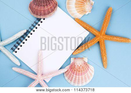 starfish and shell