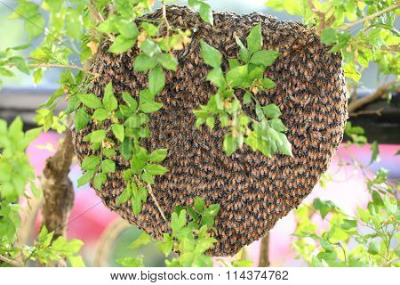 Honey bees hive swarm hanging over the tree