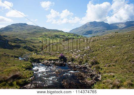 Stream in Connemara