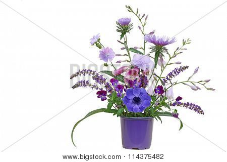 Purple planter with autumn flowers  hosta, aster, pansy, loosestrife, hortensia isolated on white background