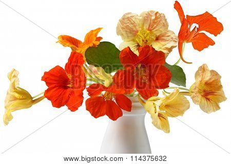 Colorful Nasturtium Flower Bouquet isolated on white background