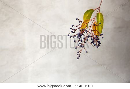 Privet Berries Soft Wall