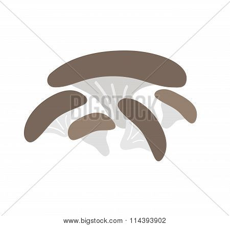 Brown champignon mushroom isolated on white background