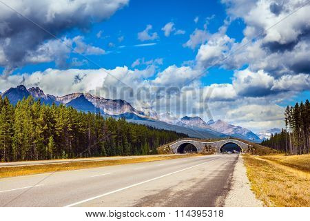 Bridge to go wild animals across the highway. Jasper National Park, Canadian Rocky Mountains
