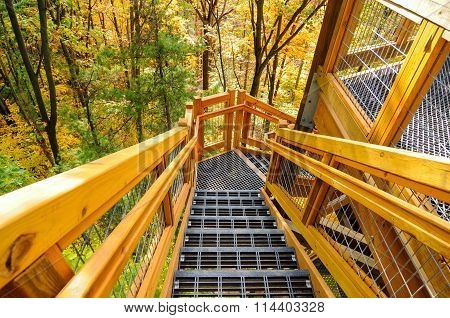 Forest Tower Steps