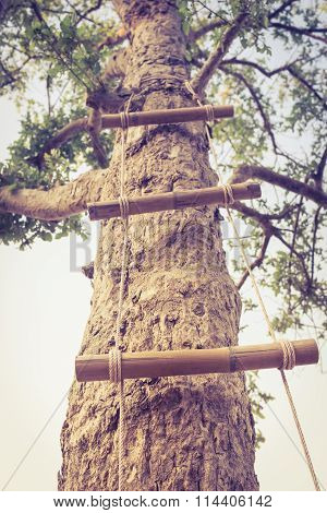 Ladder Made Of Wood And Rope Reaching Up Into High Green Tree. Retro Style.