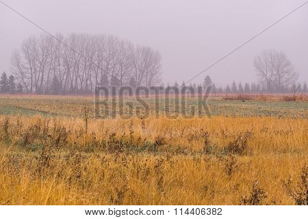 Rainy Autumn Tree Line Landscape