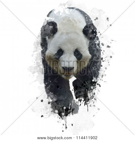 Digital Painting of Giant Panda Bear