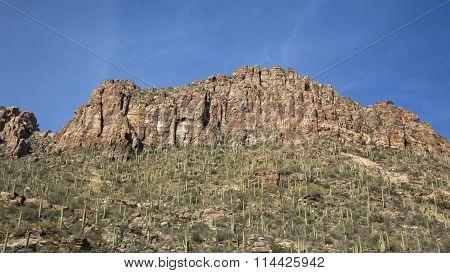 Saguaro Canyon