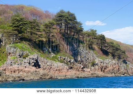 Pine trees growing along seashore
