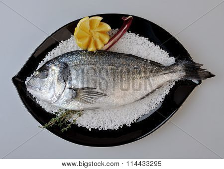 Fresh  Sea Bream (pagellus) black plate plating Isolated