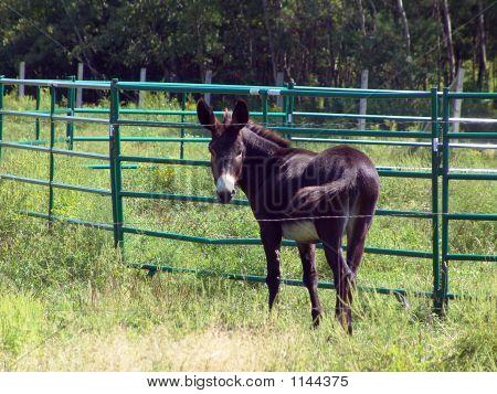 Donkey One