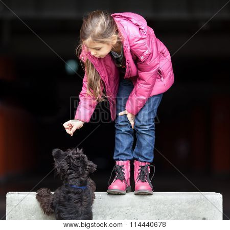 Cute little girl playing with dog (miniature schnauzer)