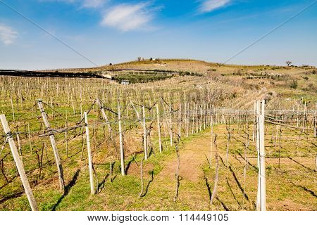 Vineyards And Farmland On The Hills In Spring.
