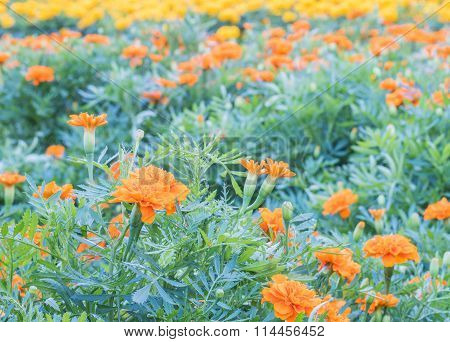 Group Of Beautiful Flower In The Garden Background