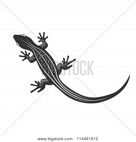Beautiful  monochrome lizard, lizard silhouette. Vector illustration
