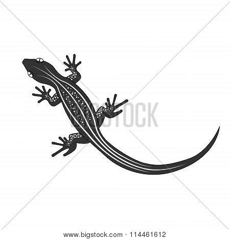 Beautiful  monochrome lizard, lizard silhouette. Vector illustration