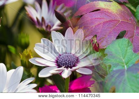 Leaves And Aster In Autumn