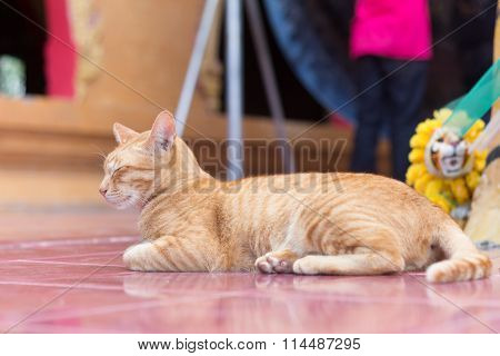 Yellow Cat During The Relaxing Time