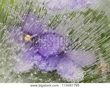 Organic Abstraction With Lilac Flowers Fragile