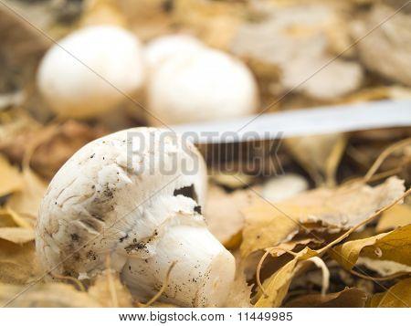 The Cut Off Mushroom
