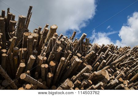 Tree logs