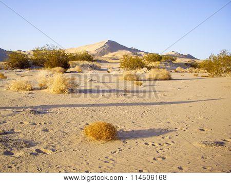 Mojave Desert Vista