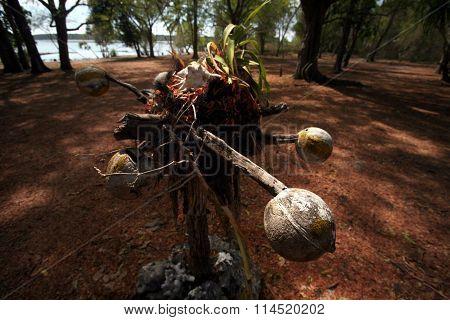 Asia East Timor Timor Leste Jaco Island Voodoo
