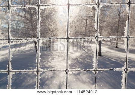 Frozen Wire Fence