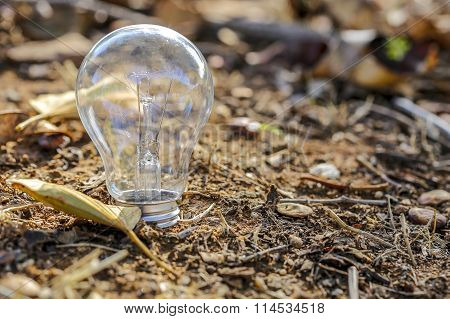 The Single Light Bulb On Earth
