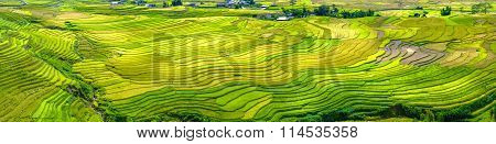 Panorama beauty of terraced fields harvest season