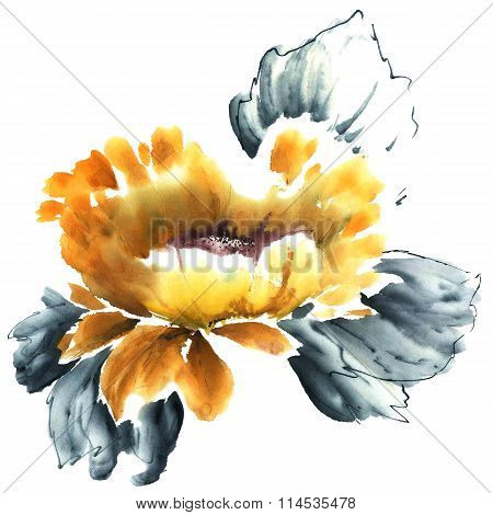 Water Lily. Flowers Illustration..