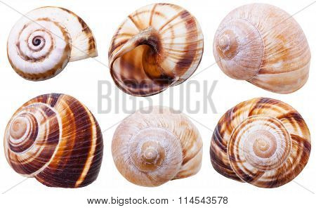Set Of Spiral Mollusc Shells Of Land Snails