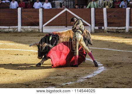 Spanish bullfighter Morante de la Puebla bullfighting with the crutch in his first Bull of the after