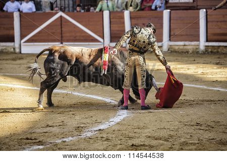 UBEDA, SPAIN - september 29, 2010: Spanish bullfighter Morante de la Puebla bullfighting with the cr