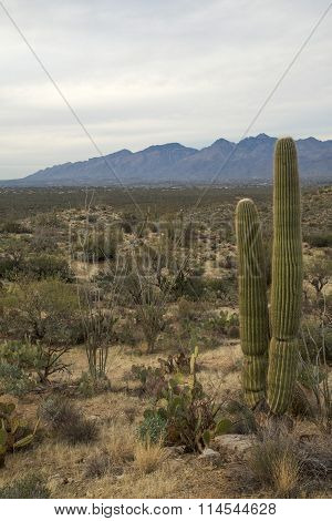 Tucson's Saguaro National Park East
