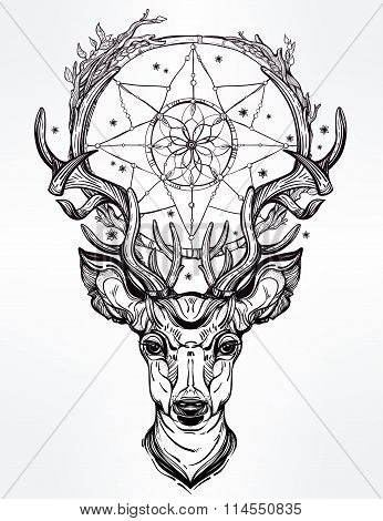 Deer head and dream catcher.