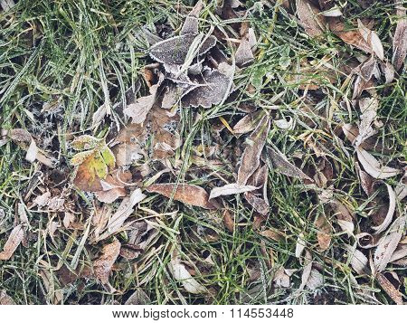Frost on Leaves and Grass