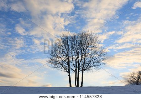 Isolated Tree Over Blue Sky. Winter Panorama