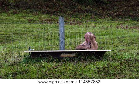 Old man in a bath