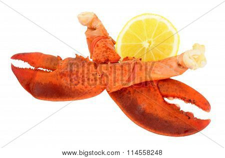 Freshly Cooked Pink Lobster Claws