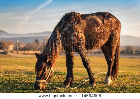 Horse Grazing In The Pasture.