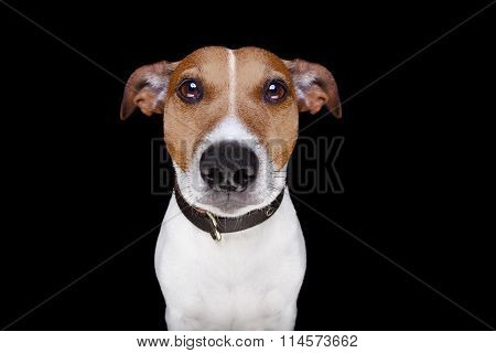 Dog Isolated On Black