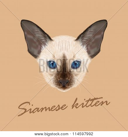 Siamese Kitten. Vector Illustration